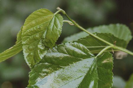 Antioxidantes para la piel en verano